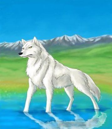 Волк серый, смелый