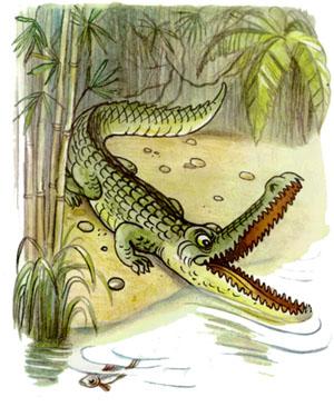 Шакал и крокодил